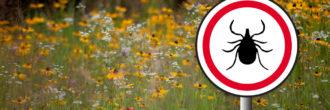 Previdno v naravo: klopni meningitis in borelioza sta v porastu