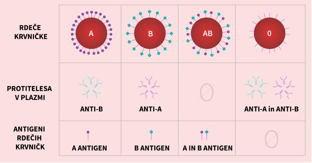 Krvne skupine ‒ prisotnost antigenov in protiteles