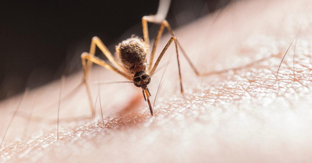 Komarji in pik komarjev